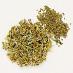 Alfalfa-Seed